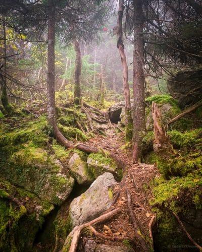 Balsam Cap Herd Path