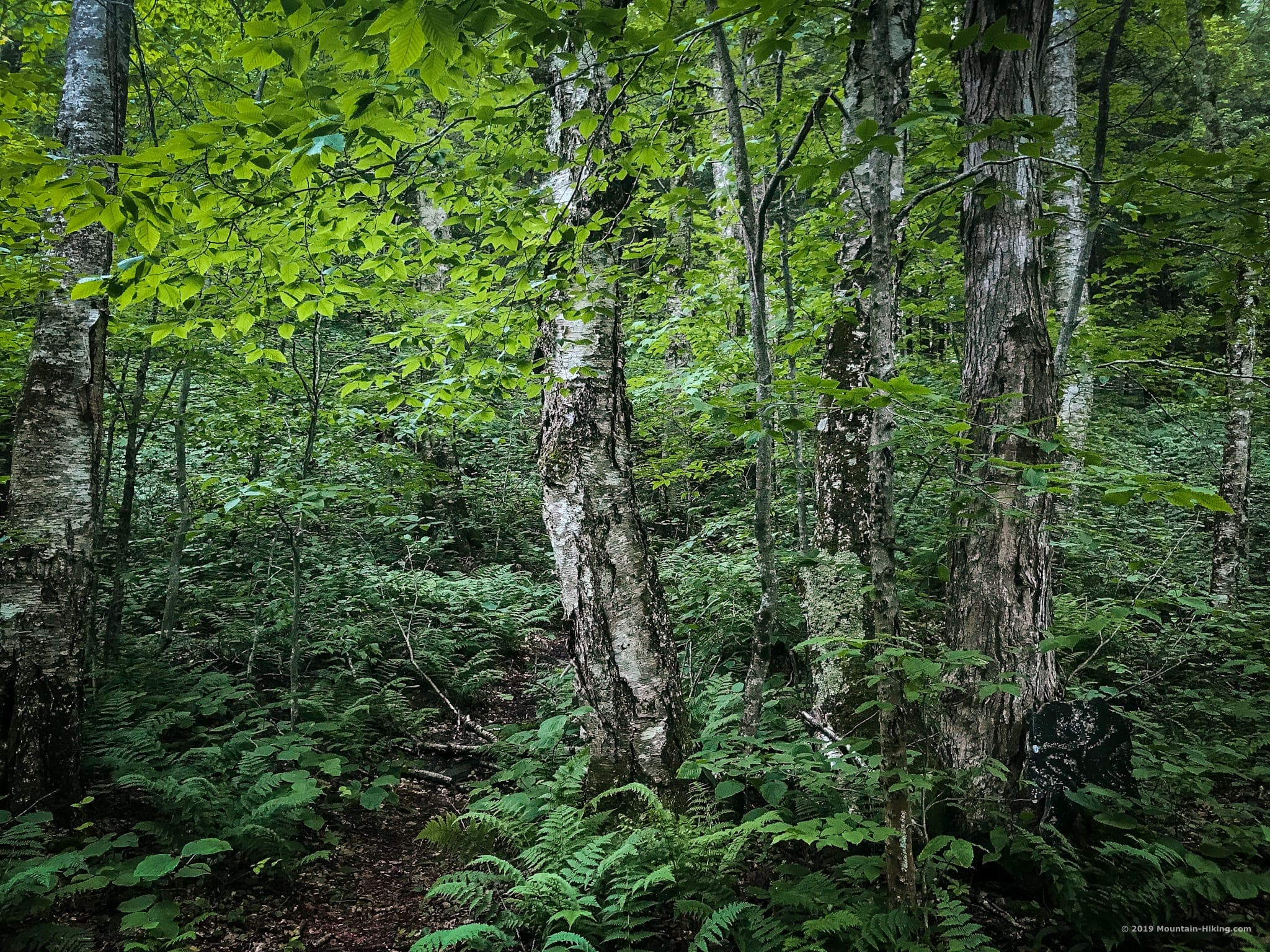 trees on hiking trail in woods