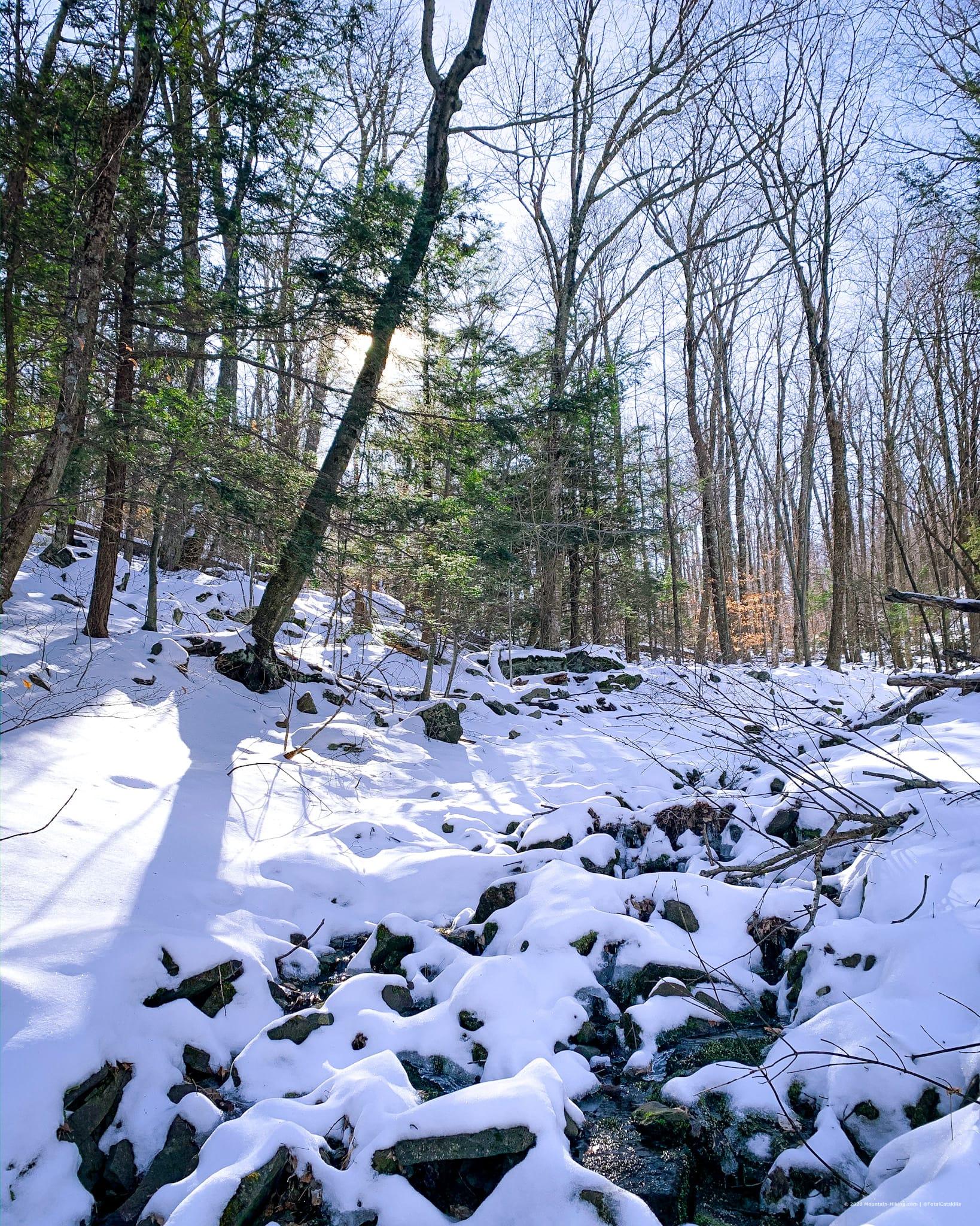 Snow, trees