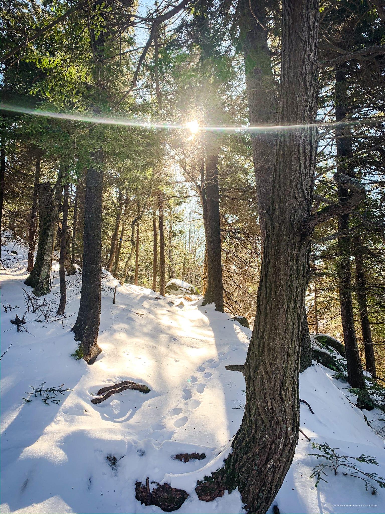 trees, snow, sunlight, catskills