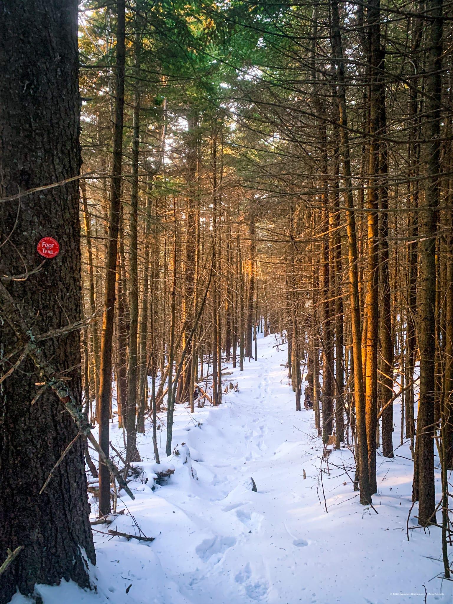 Long trail view