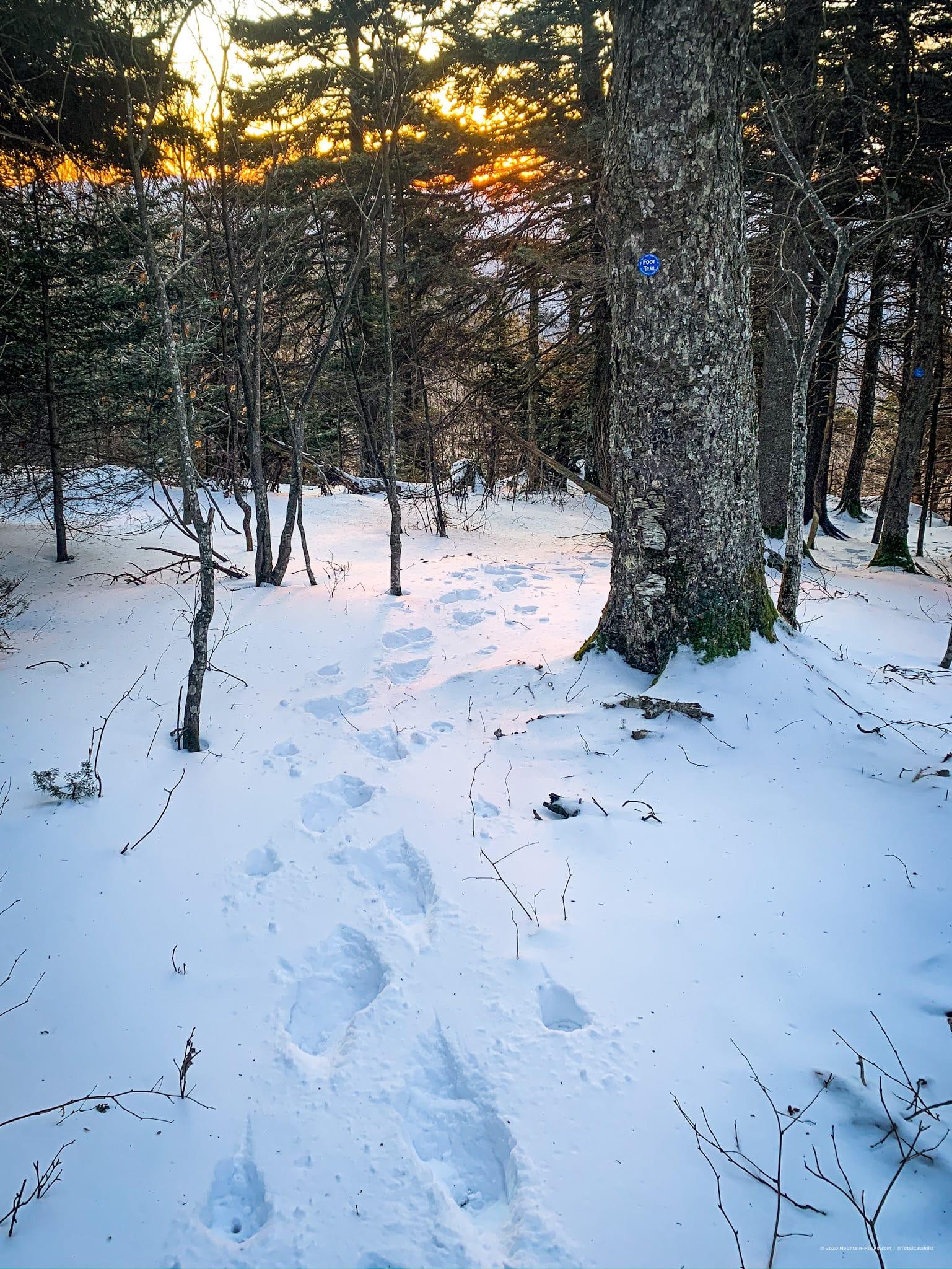 Snow prints, woods