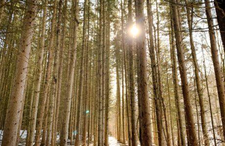 Spruce & Sunshine