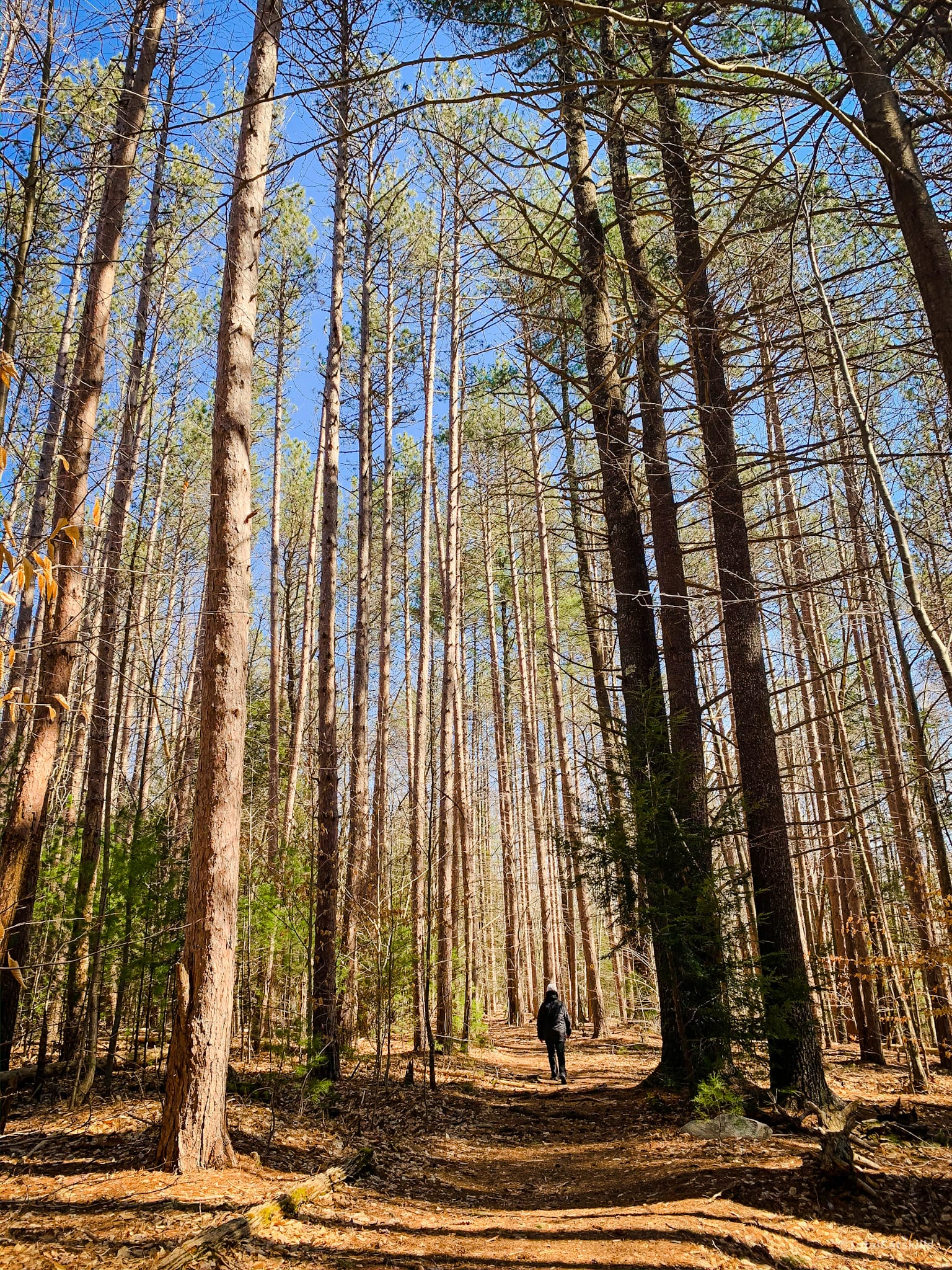 catskill hiker in woods