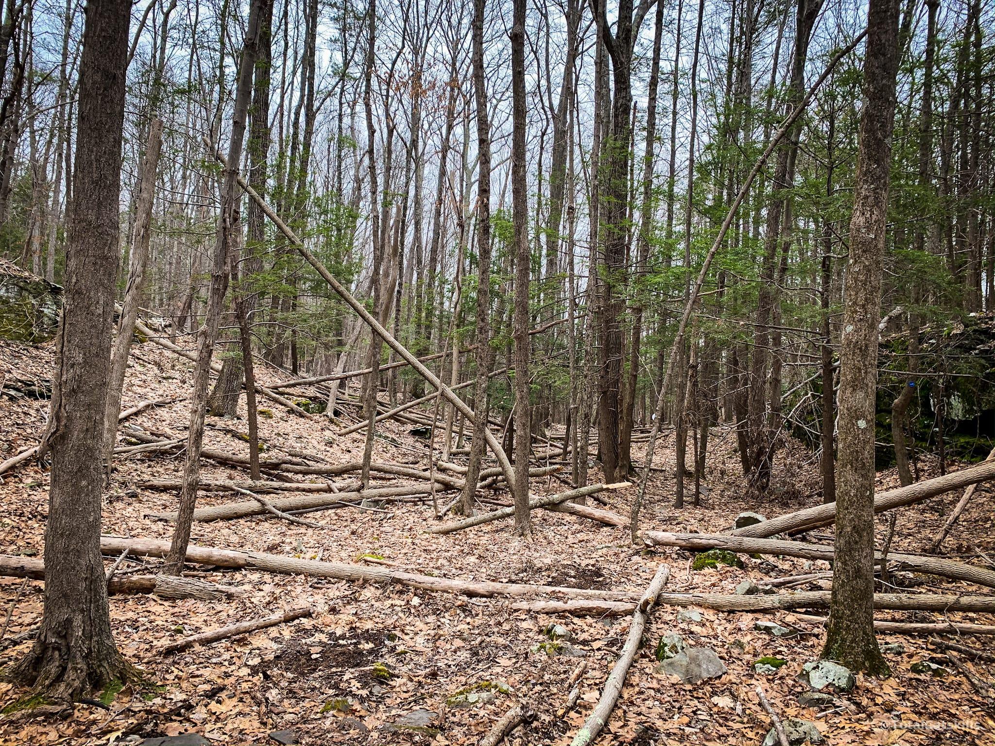 fallen trees in woods