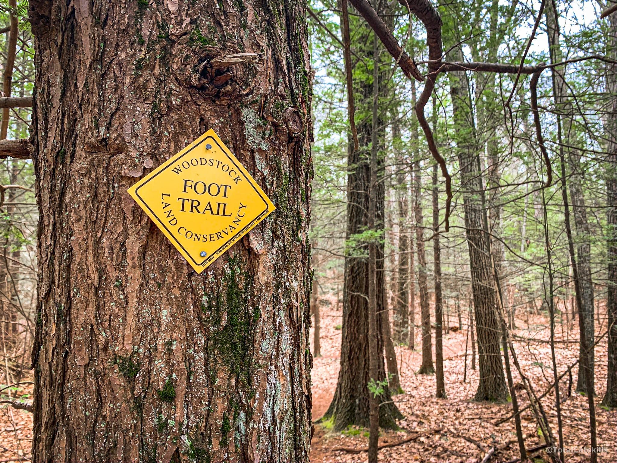 trail blaze on tree