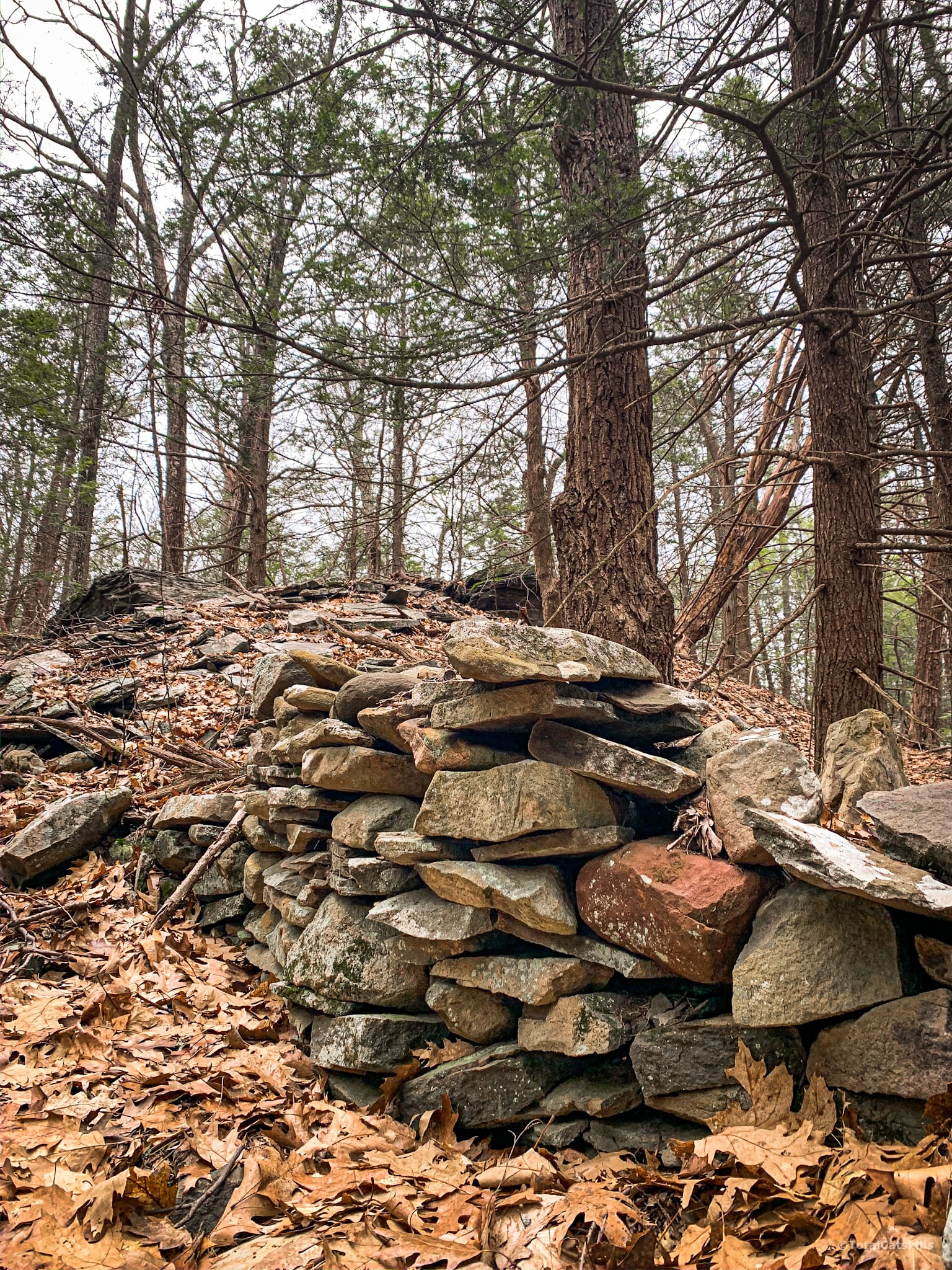 stone fence in woods
