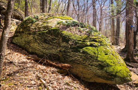 glacial erratic covered in moss