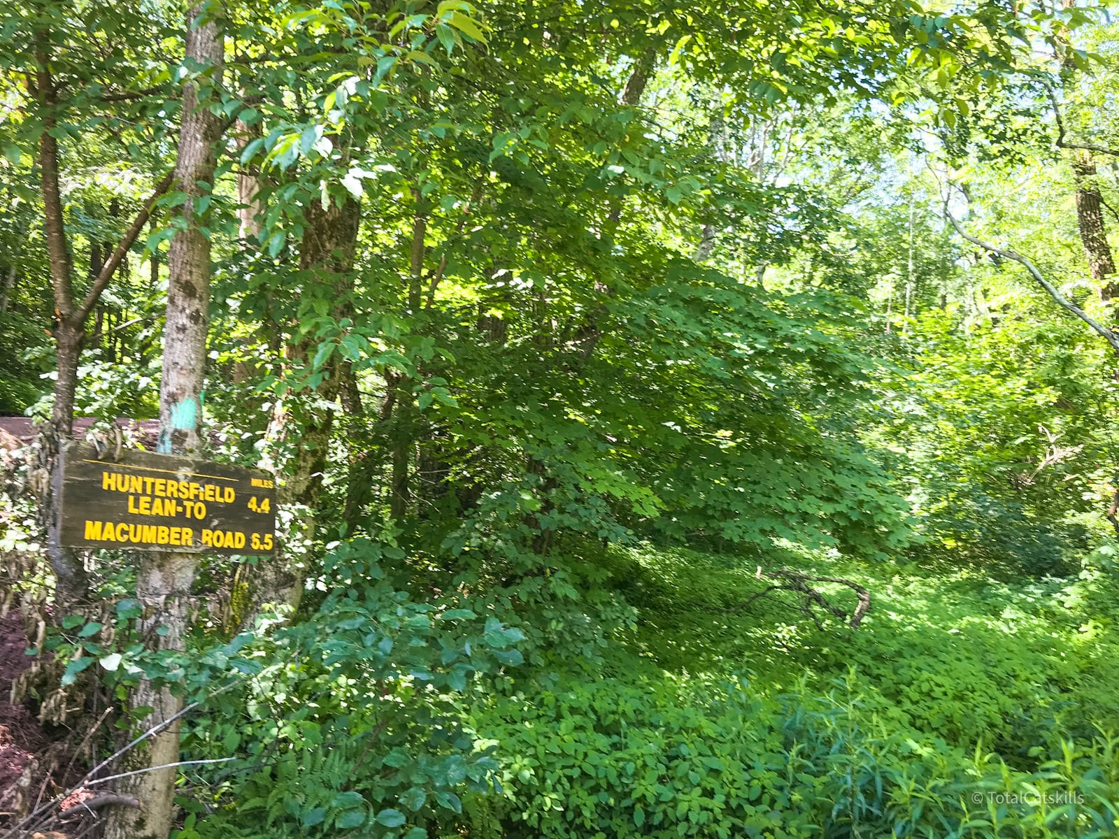 trail signs overgrown