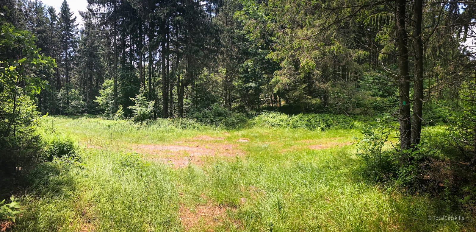 open crossroads in woods