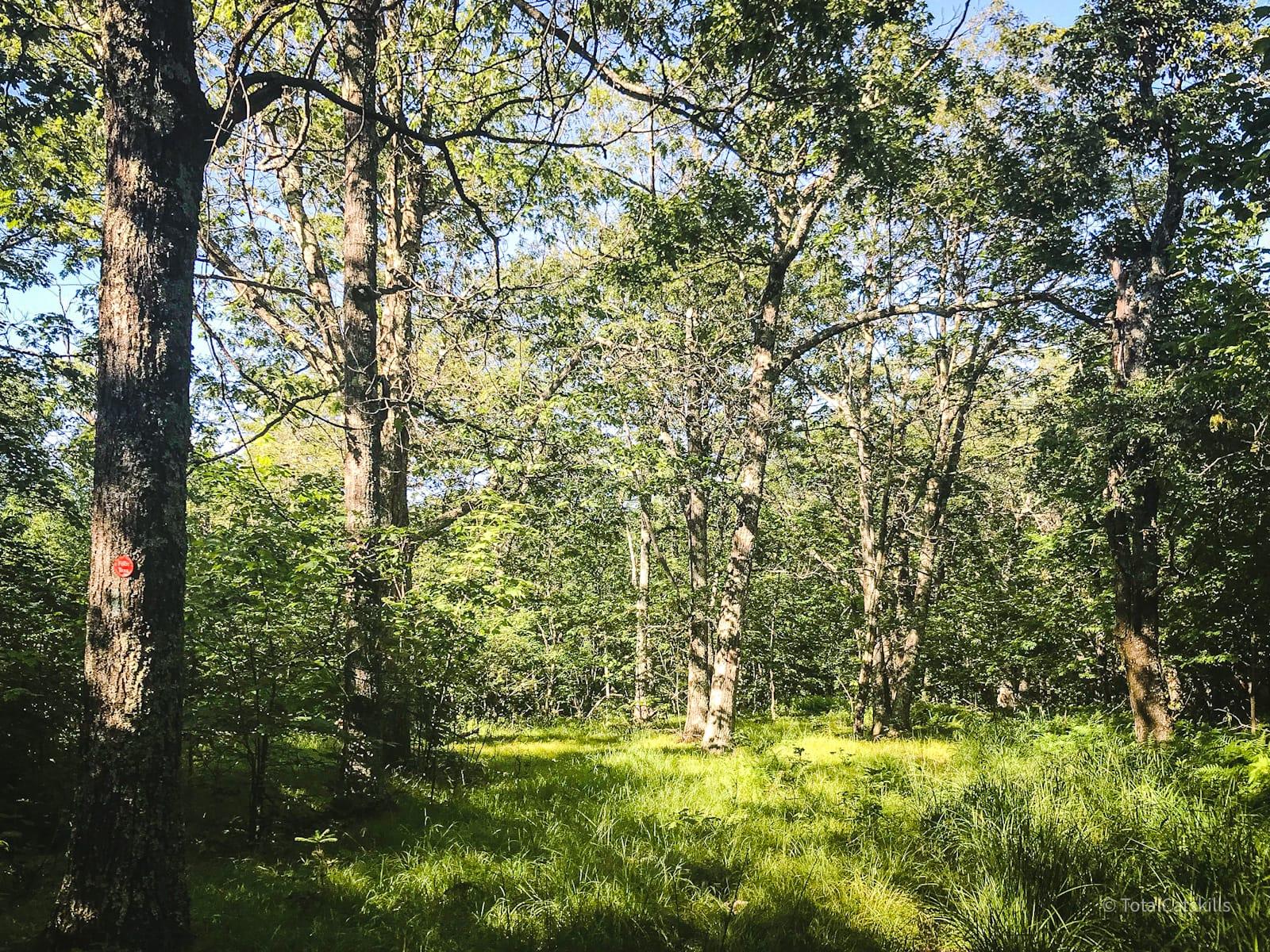 open woods area