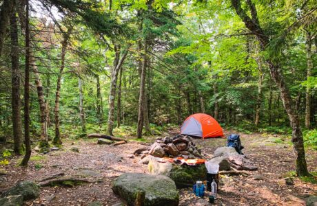 orange and gray tent in campsite in woods