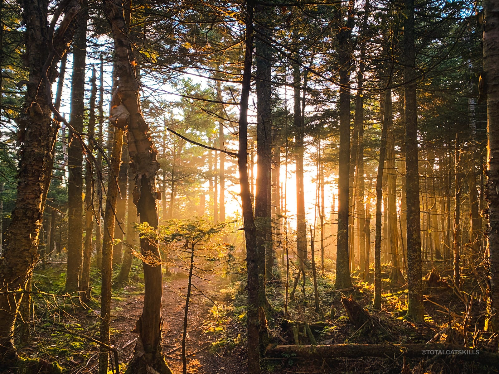 sunlight pouring through woods