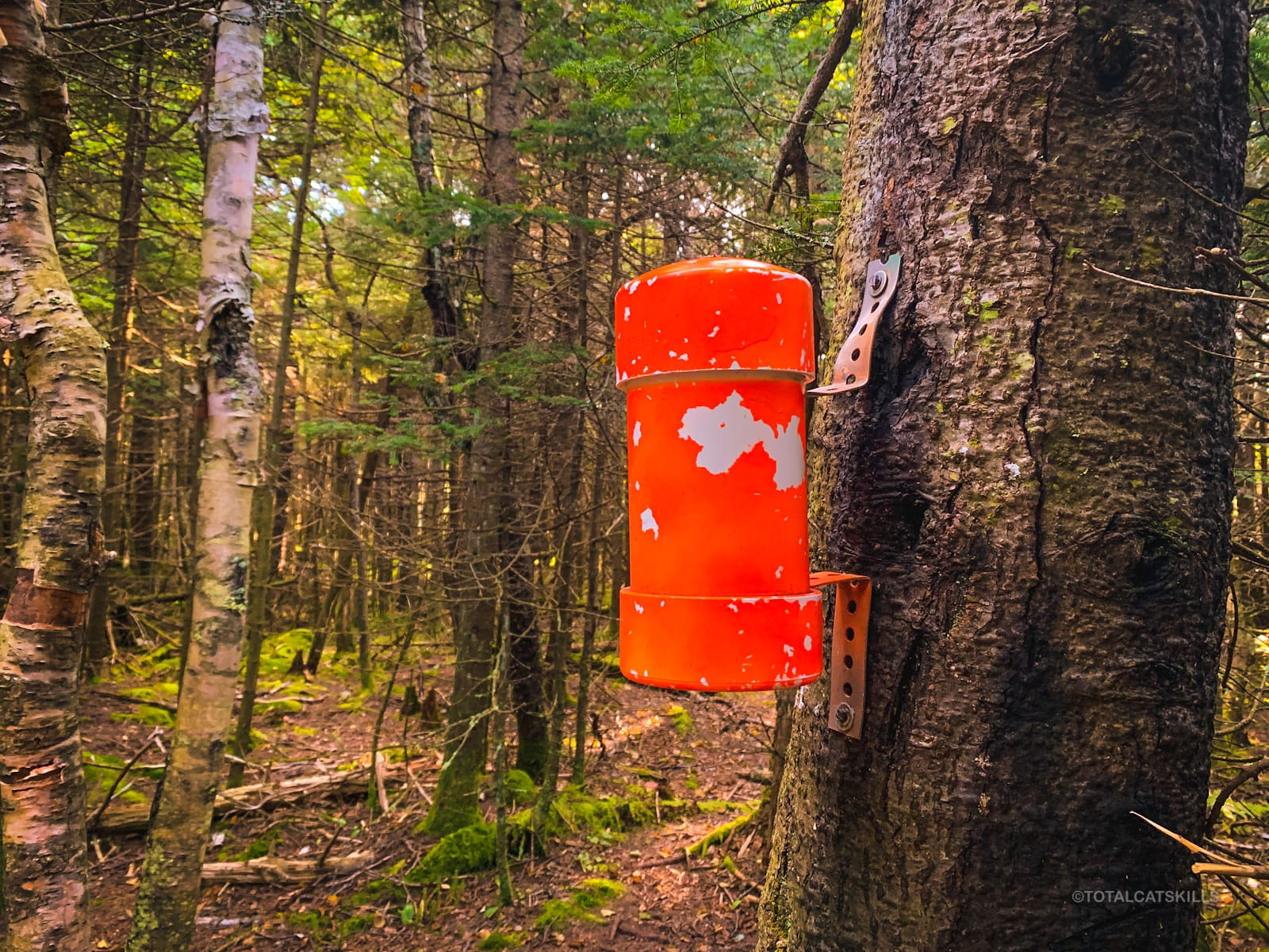 orange canister affixed to tree