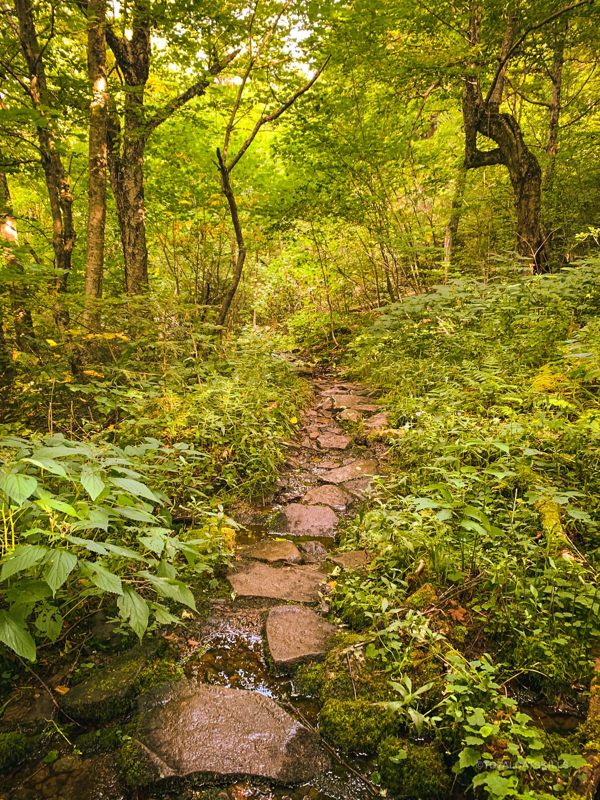 easy rocky trail