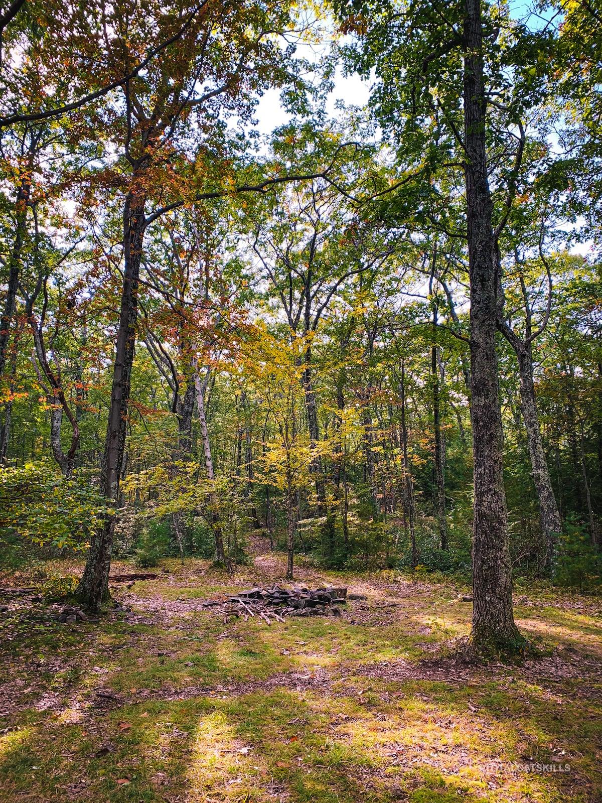 campsite in woods