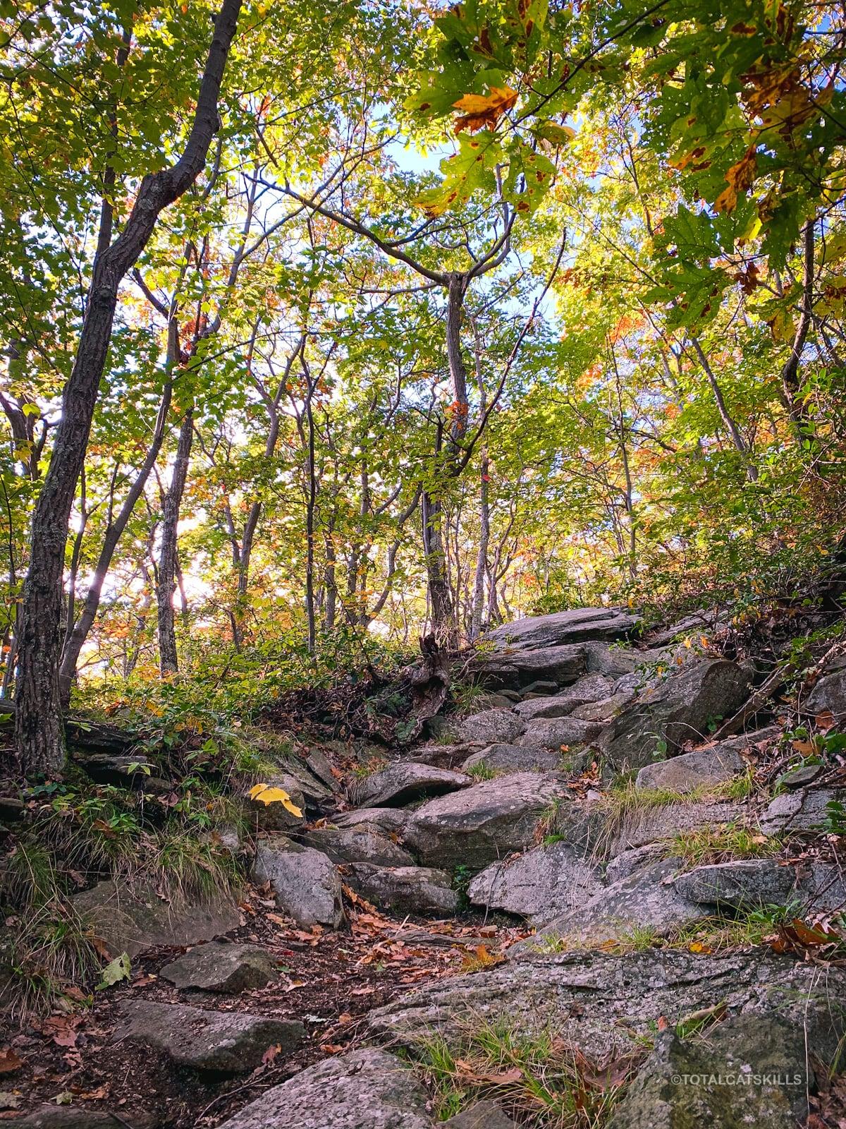 rocky trail in woods