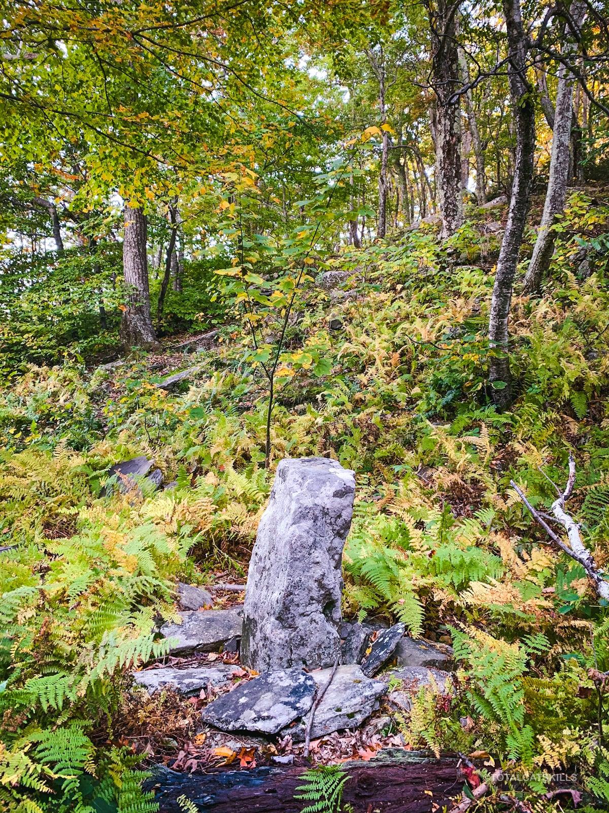 stone marker among ferns