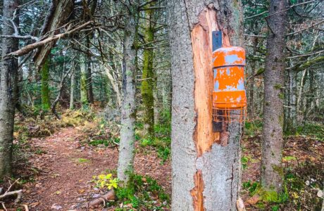 orange canister on tree trunk