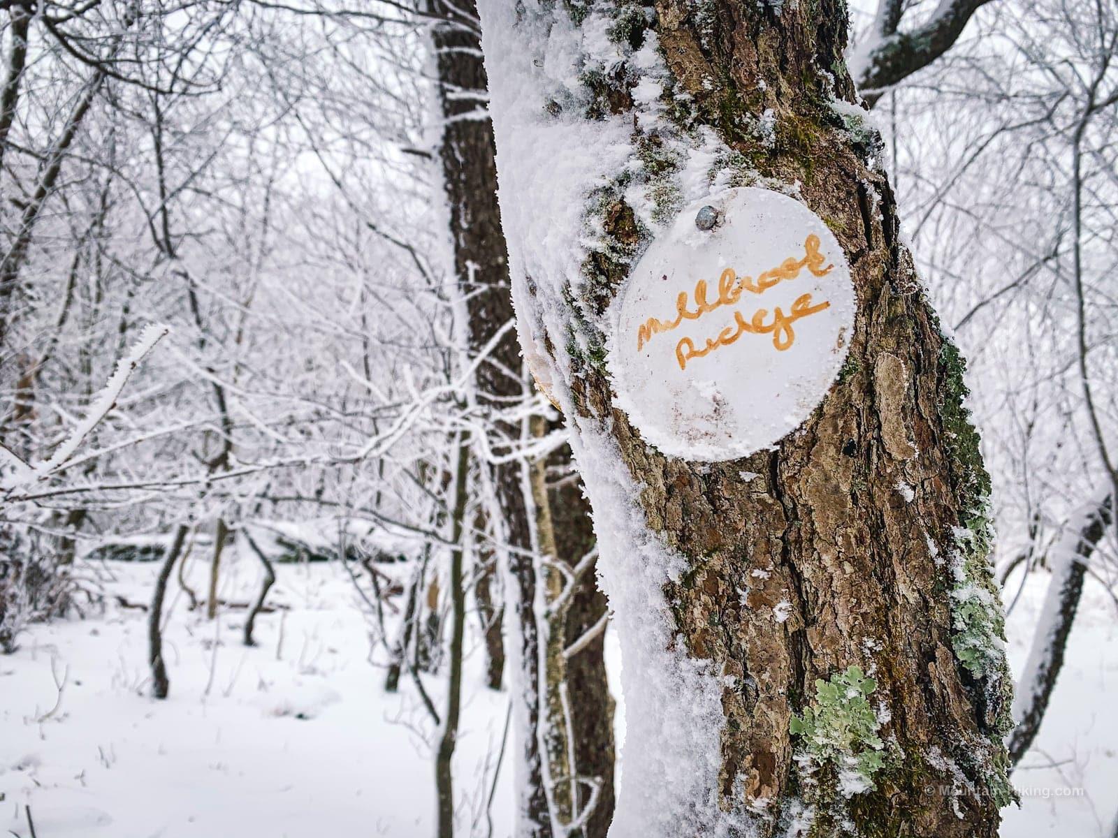 summit marker on tree