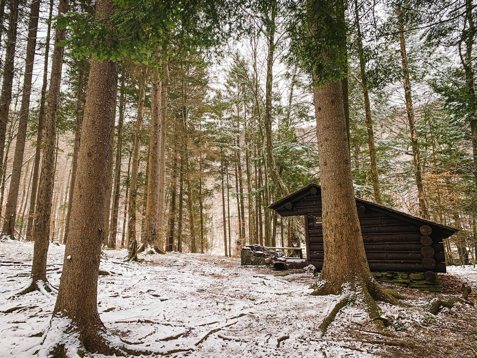 lean-to in woods