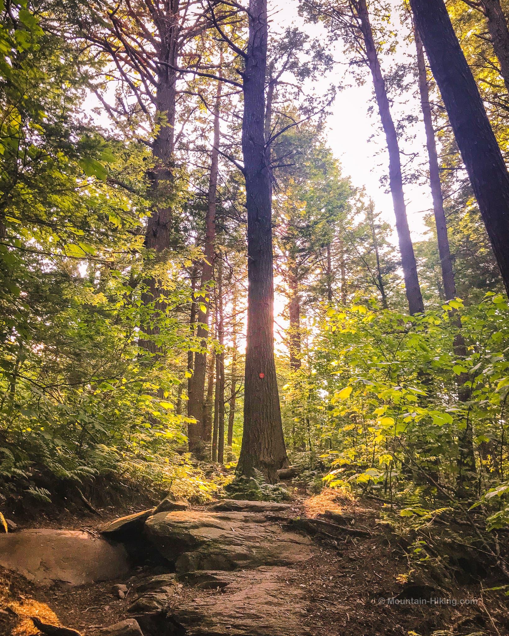 dappled sunshine in woods