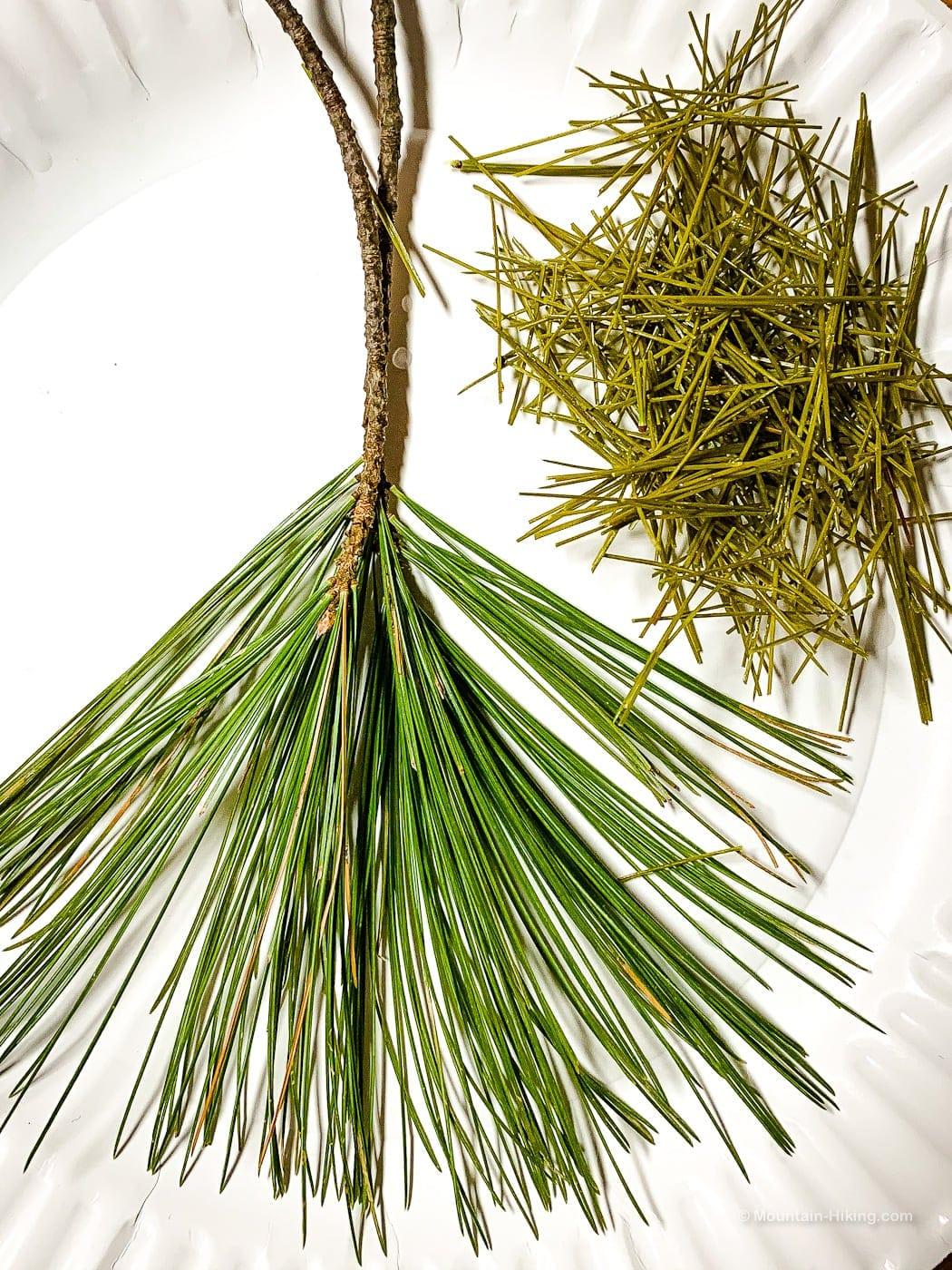 white pine needles