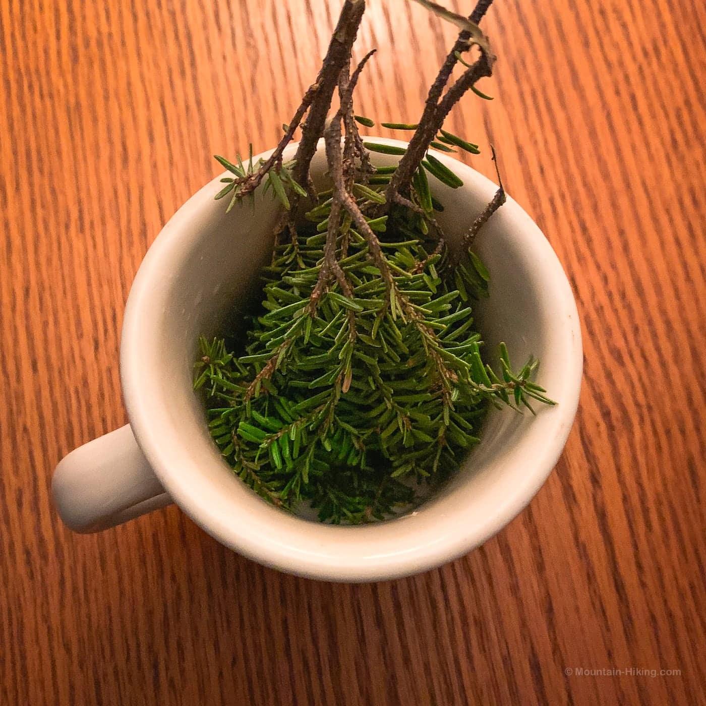 hemlock twigs and needles in a mug