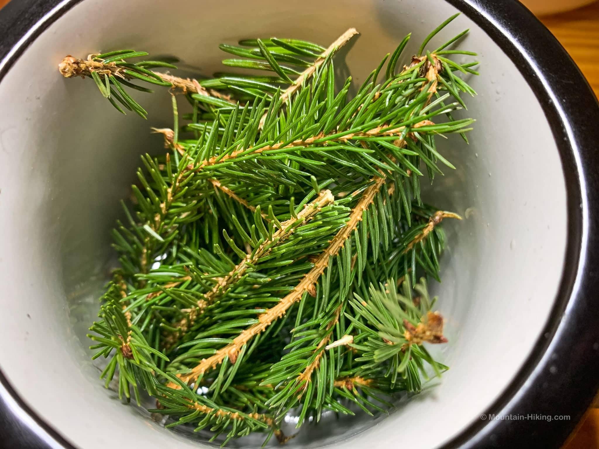 spruce needles in white mug